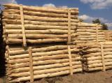 Bossen en Stammen - Constructie Balken Rond, Acacia