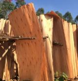 Veneer Supplies Network - Wholesale Hardwood Veneer And Exotic Veneer - Eucalyptus Rotary Cut Veneer
