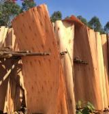 Eucalyptus Rotary Cut Veneer - Eucalyptus Rotary Cut Veneer