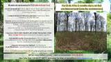Propriétés Forestières Chêne - Petite forêt de 4 hectares dans la vallée de la Loire (18 000 euros, négociable)