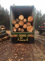 Wood Logs For Sale - Find On Fordaq Best Timber Logs - SYP/Scots Pine Saw Logs