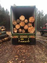 Resinosi  Tronchi In Vendita - Tronchi Da Sega, Southern Yellow Pine