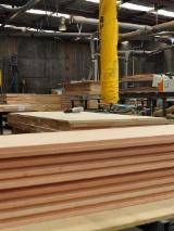 Australien - Fordaq Online Markt - Australisches & Neuseeländisches Nadelholz, Türen, Massivholz, Radiata Pine