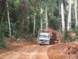 Wood Transport Services - Road Freight Gabon