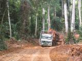 Houttransportdiensten - Wordt Lid Op Fordaq - Vrachtverkeer, 1000+ m3 Vlek – 1 keer