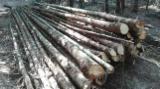 Softwood  Logs - Fir Construction Round Beams