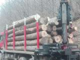 Hardwood  Logs For Sale Romania - Beech/Ash/Lime Logs