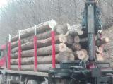 Romania Hardwood Logs - Beech/Ash/Lime Logs