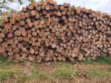 Hardwood  Logs - Brazil round Teak log stock offer
