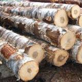 Encuentra los mejores suministros en Fordaq - Troncos Industriales , Abedul