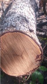 Wälder Und Rundholz Afrika - Stämme Für Die Industrie, Faserholz, Kossoholz