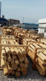 Hardwood  Logs For Sale - acacian sapwood-free & sanded logs