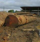 Find best timber supplies on Fordaq - Doussie Saw Logs 70+cm