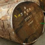 Find best timber supplies on Fordaq - Sipo Saw Logs 70+cm