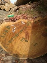 Tvrdo Drvo  Trupci - Za Rezanje, Tali
