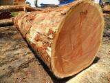 Cameroon Hardwood Logs - A/B Zingana Saw Logs, diameter 70; 80; 90+ cm
