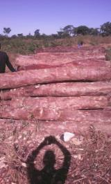 Wälder Und Rundholz Afrika - Schnittholzstämme, Muhuhu