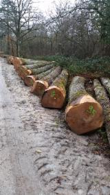 Wälder und Rundholz - Schnittholzstämme, Eiche