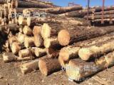 Forest and Logs - Elliotis Pine Saw Logs, FSC, Diameter 11-40 mm