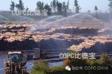 Taiwan - Fordaq Online mercato - Vendo Tronchi Da Sega Radiata Pine  FSC