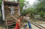 Ecuador Hardwood Logs - Bamboo Logs 5-14 cm