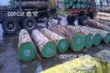FSC Certified Hardwood Logs - Chilean Eucalyptus Logs, 30-40 cm diameter
