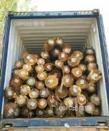 Taiwan Hardwood Logs - Eucalyptus Grandis Logs from Brazil