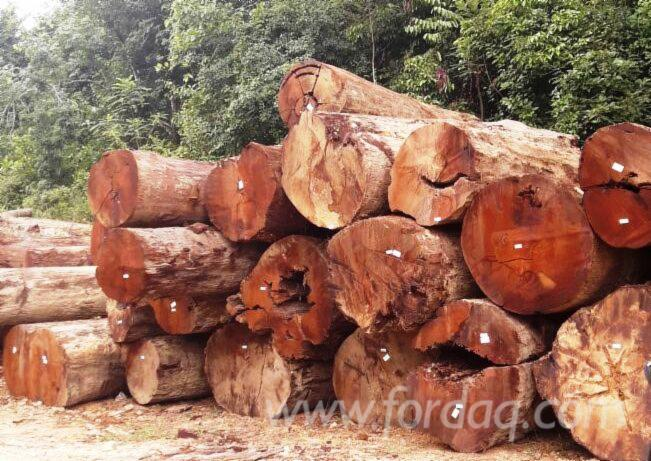 Chengal Wood Class One 100 000 200 000 Tons