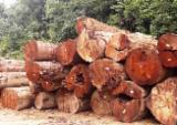 Lasy Na Sprzedaż - Malezja, Chengal