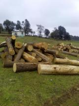 Softwood  Logs - Cypress Round Logs