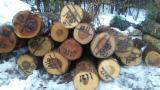 Offers USA - Mixture of hardwood logs for sale (Ash, Cherry, Hard Maple), diameter 12+ inches
