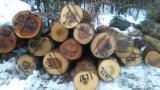 Wälder und Rundholz - Schnittholzstämme, Esche, Kirsche , Hard Maple, Zuckerahorn