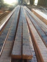 Laubschnittholz, Besäumtes Holz, Hobelware  Zu Verkaufen Polen - Bretter, Dielen, Eukalyptus