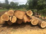 Wälder Und Rundholz Ozeanien  - Schnittholzstämme, Kampferholz