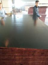 上Fordaq寻找最佳的木材供应 - Linyi Huabao Import and Export Co.,Ltd - 覆膜胶合板(黑膜), 白杨