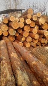 null - Looking for Pine Logs/Sawn Timber