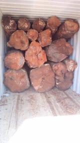 锯材级原木, 绿柄桑木, 筒状非洲楝木, 非洲格木