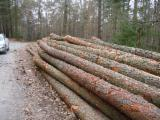 Germany Softwood Logs - Larch Saw Logs from Germany, 20-30 cm diameter