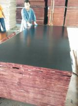 Poplar Black Film Faced Plywood, 18 mm thick