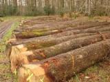 香港 - Fordaq 在线 市場 - 锯材级原木, 橡木