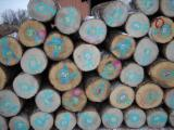 Hardwood Logs importers and buyers - Great Demand for Ash/Red Oak Logs