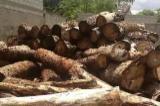 Great demand for Rhodesian/Mukwa Saw Logs