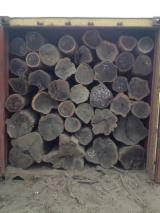 Kiaat Hardwood Logs - Grenadillo / Kiaat / Ovengkol Logs 25+ cm