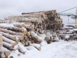 Germany Hardwood Logs - Birch Veneer logs from Russia, diameter 18+ cm