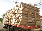 Forest And Logs South America - Teak/Saman/Cypress/Pine/Eucalyptus Saw Logs, diameter 90 cm
