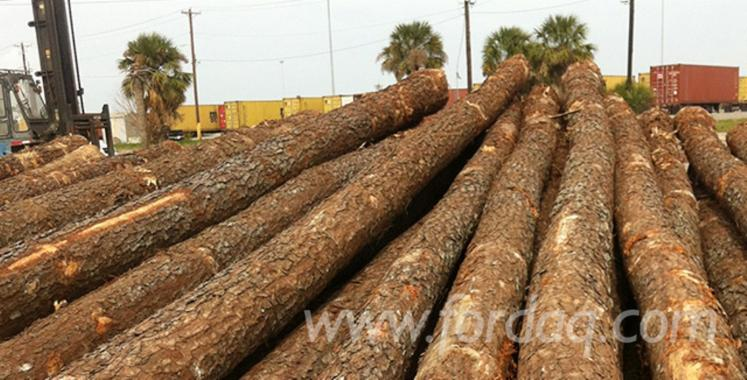 Spruce black pine saw logs diameter 25 30 40 cm for Cypress log home prices