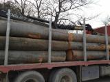 Laubrundholz  Zu Verkaufen - Schnittholzstämme, Buche, FSC