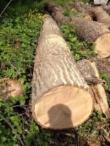 Wälder und Rundholz - Schnittholzstämme, Zerreiche, FSC