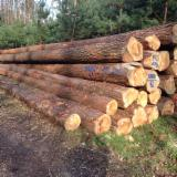 Nadelrundholz Zu Verkaufen - Kiefer Stammholz zu verkaufen
