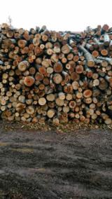 Wälder und Rundholz - Schnittholzstämme, Robinie , Esche , Buche